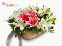 Oriental Lilies with a touch of Pink